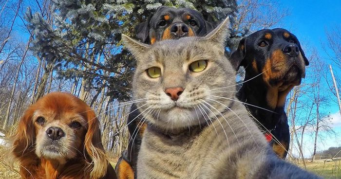 funny-animal-selfies