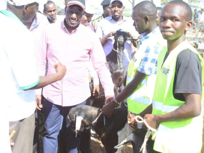 Deputy President Dr. William Ruto during Kimalel Goat Auction in Marigat, Baringo South Sub-County on Saturday. (courtesy)