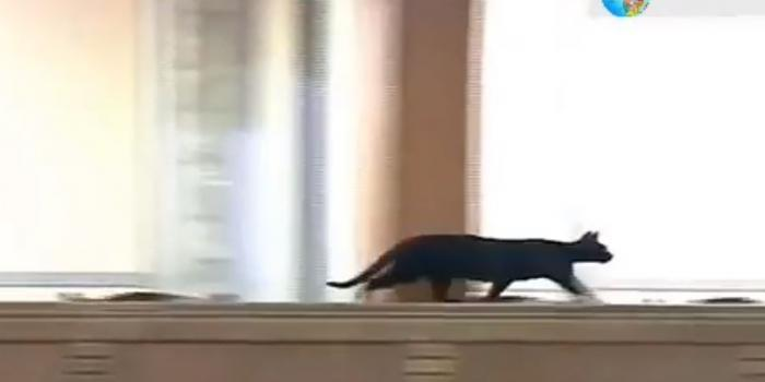 The black cat in Parliament on 5/12/2018.