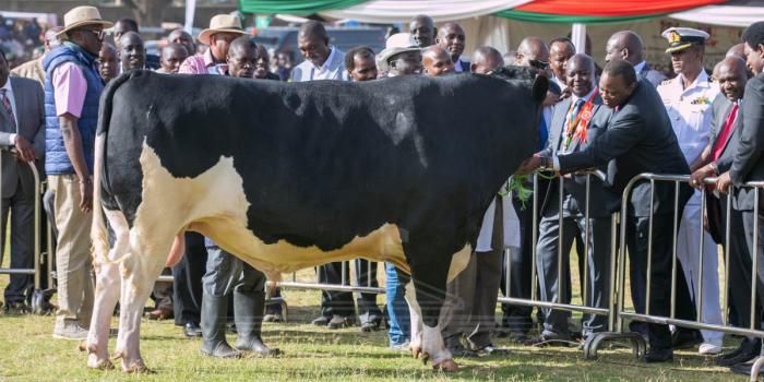President Uhuru at the Narok County inaugural livestock show and auction